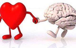 mozak_srce